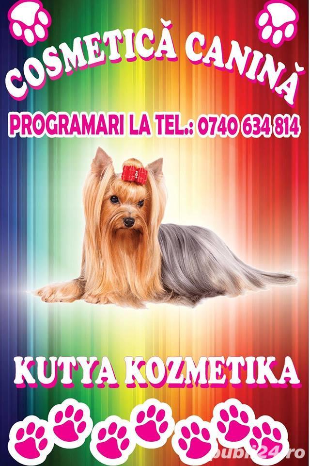 Salon cosmetica canina Satu Mare Closca - Kutya Kozmetika