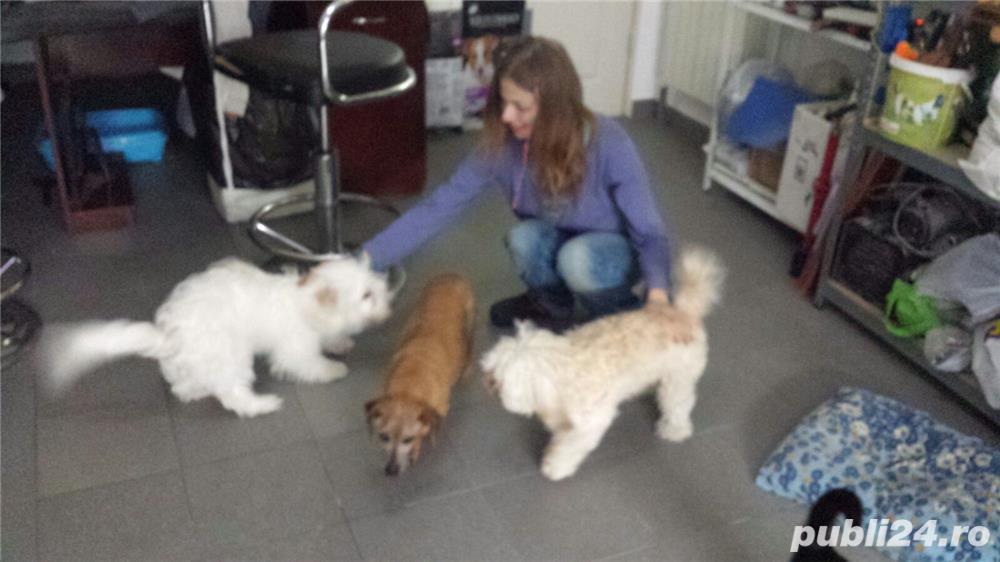 Pensiune animale companie / cazare caini catei pisici canina  felina orice tip de pet