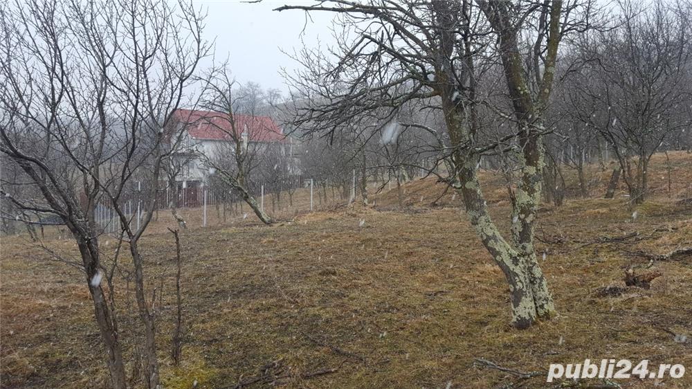 Livada in Cisnadioara-Sibiu