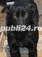 Tango, pufosul cu blana neagra pentru adoptie