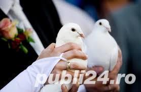 * VAND si INCHIRIEZ porumbei albi pentru NUNTI in sibiu