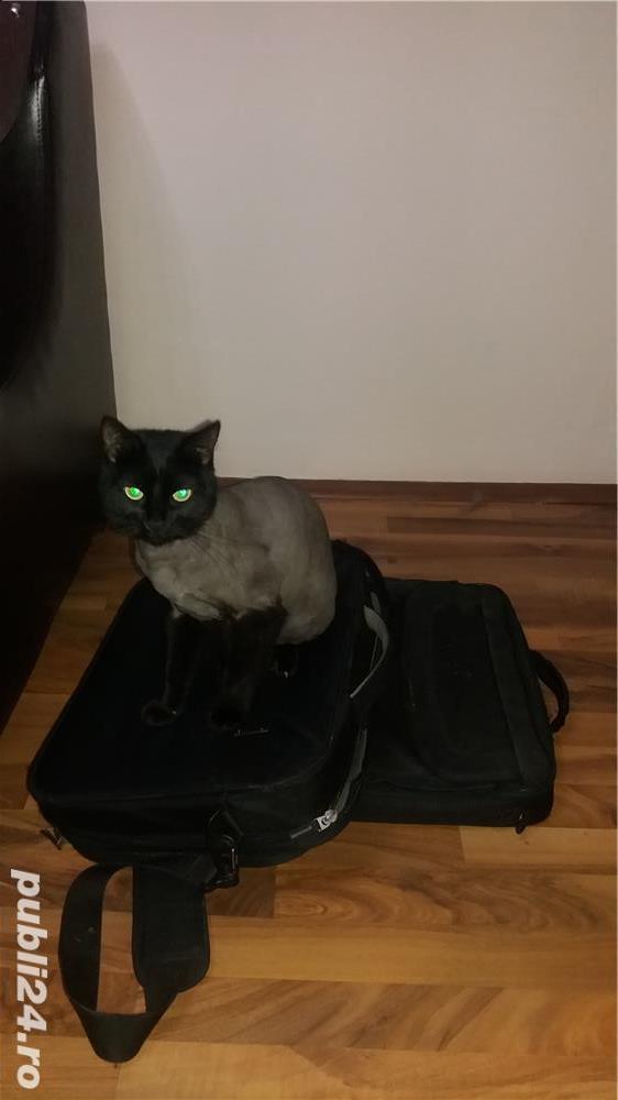 Tund pisici la domiciliul dvs Vaslui