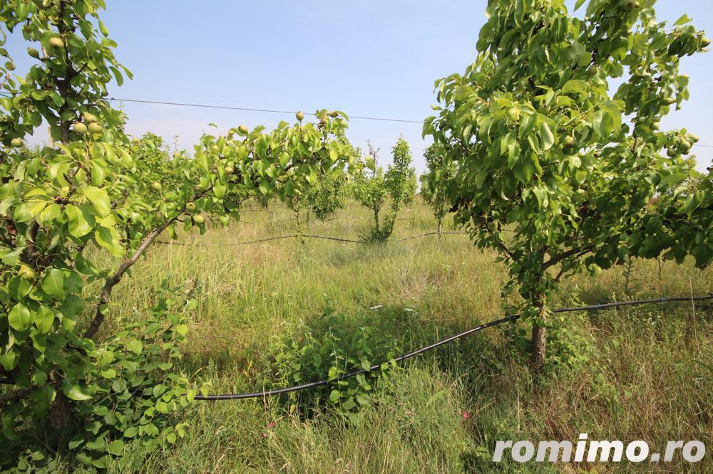 Teren 346,000 mp zona Arad , livada si teren agricol