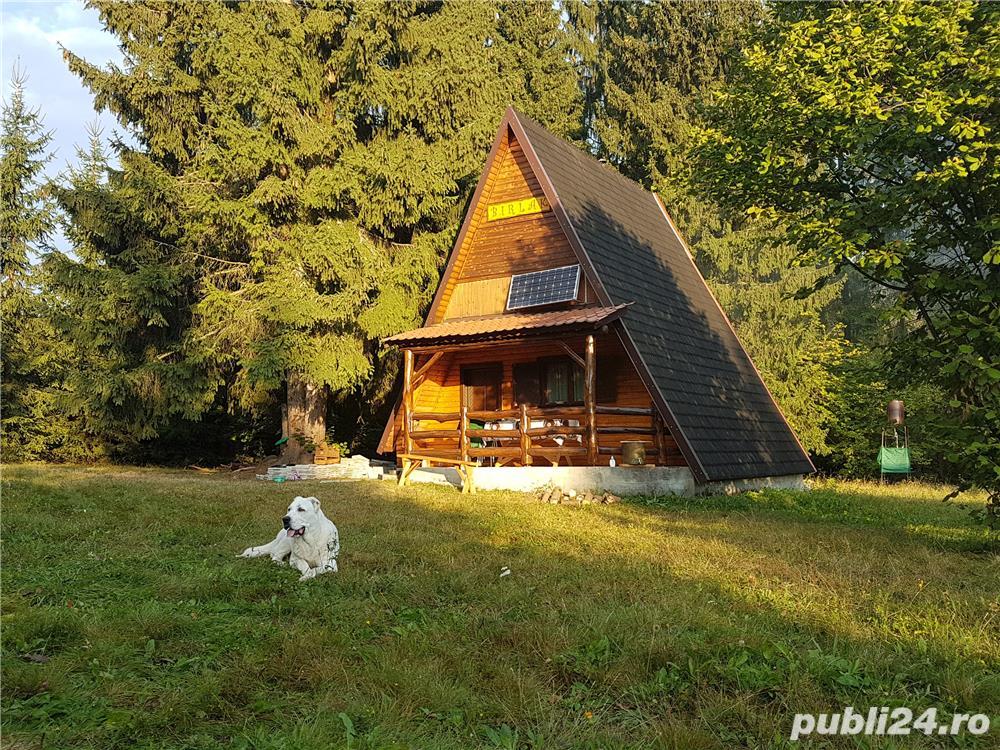 Cabana la Bucin Hargita