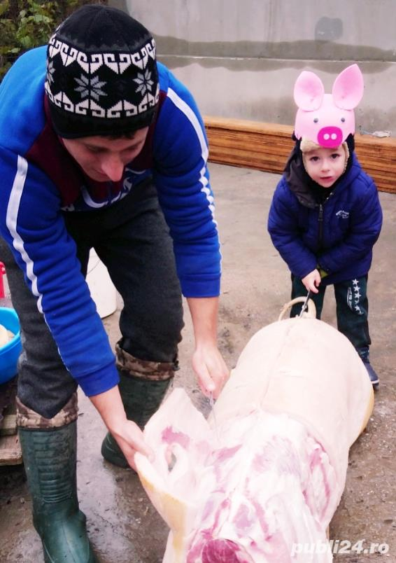 Vand porci ! Porcii sunt crescuti natural in propria gospodarie