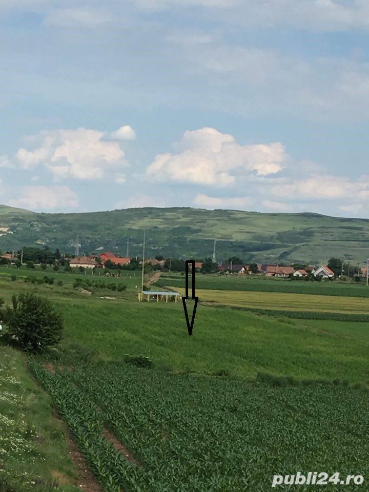 Vanzare  terenuri constructii  8000 mp Alba, Teius  - 448000 EURO