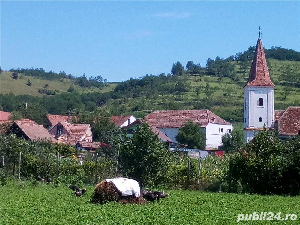 Casa saseasca renovata, cu 2 apartamente si teren 6380 mp , Seica Mare, Sibiu