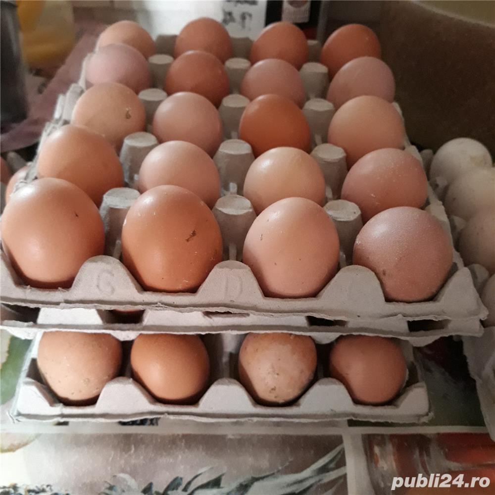 oua de gaina pentru consum
