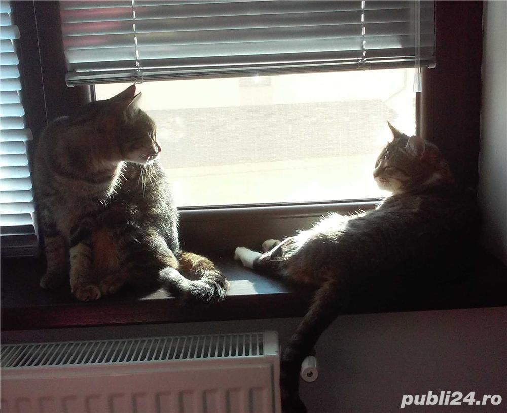 Cazare pisici in Bucuresti