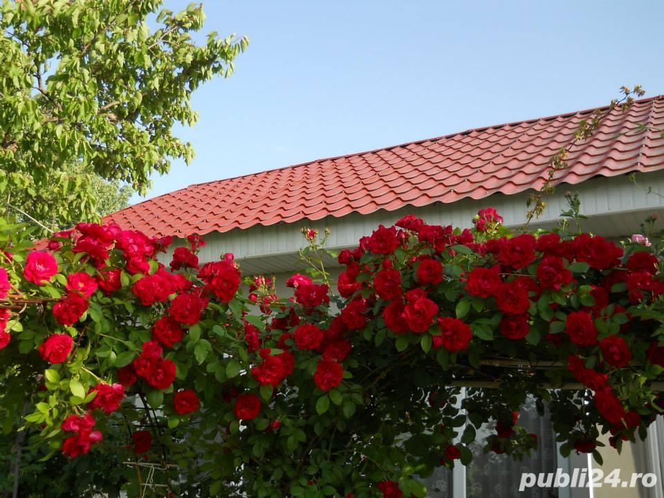 Vand casa la tara in Comuna Perieti-Olt