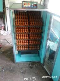 incubator 600 oua gaina automat