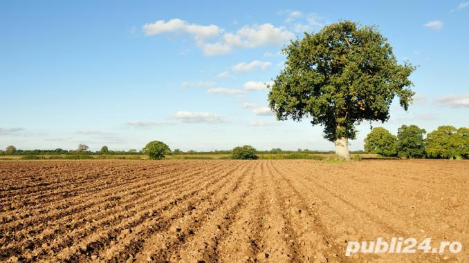 Arendez teren agricol 1200 lei/ha. Judetul Braila