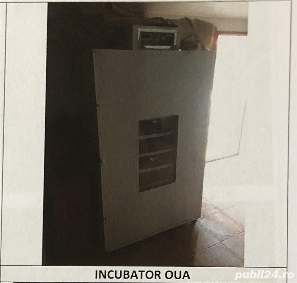 INCUBATOR OUA