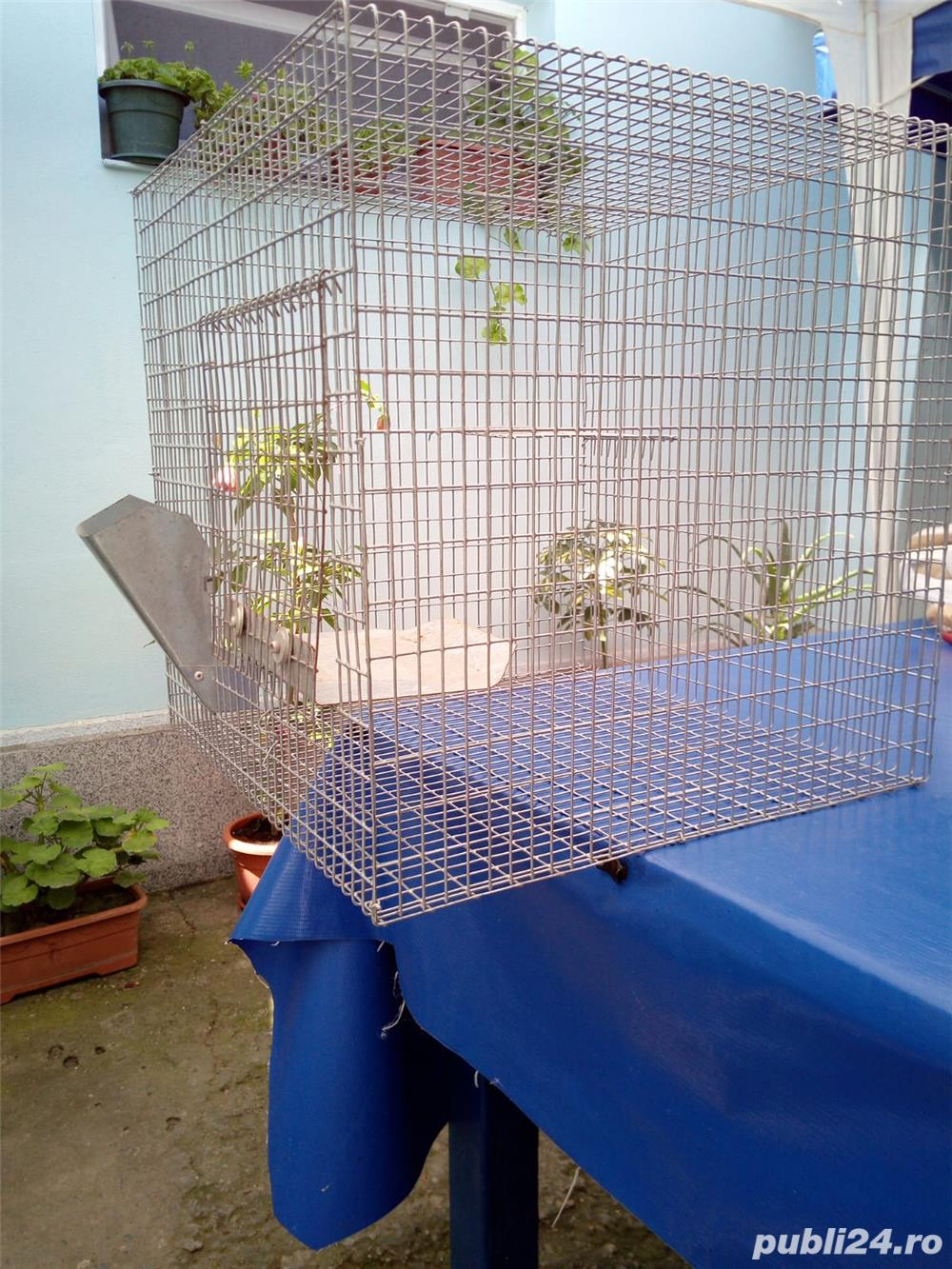 Cusca chinchilla, iepure (companie)
