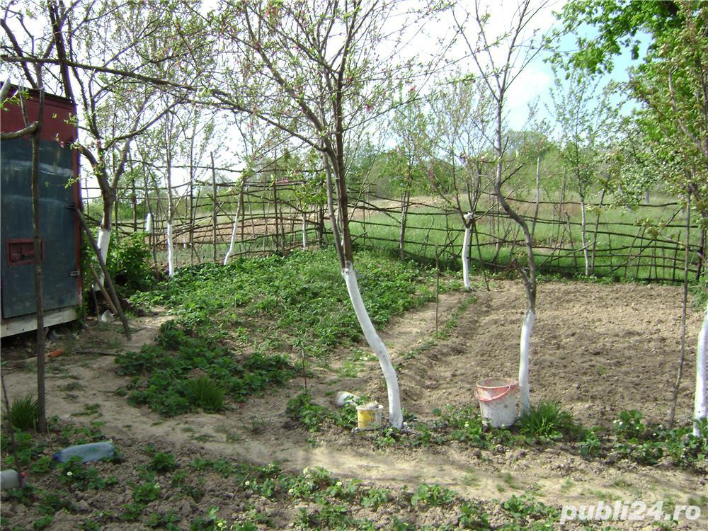 Vând gradină cu pomi fructiferi Caransebeș zona Teiuș