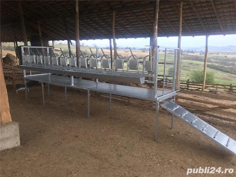 Standuri de capre si oii pentru sala de muls