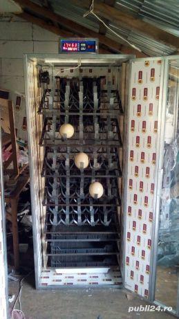 Incubator 30 oua struț automat