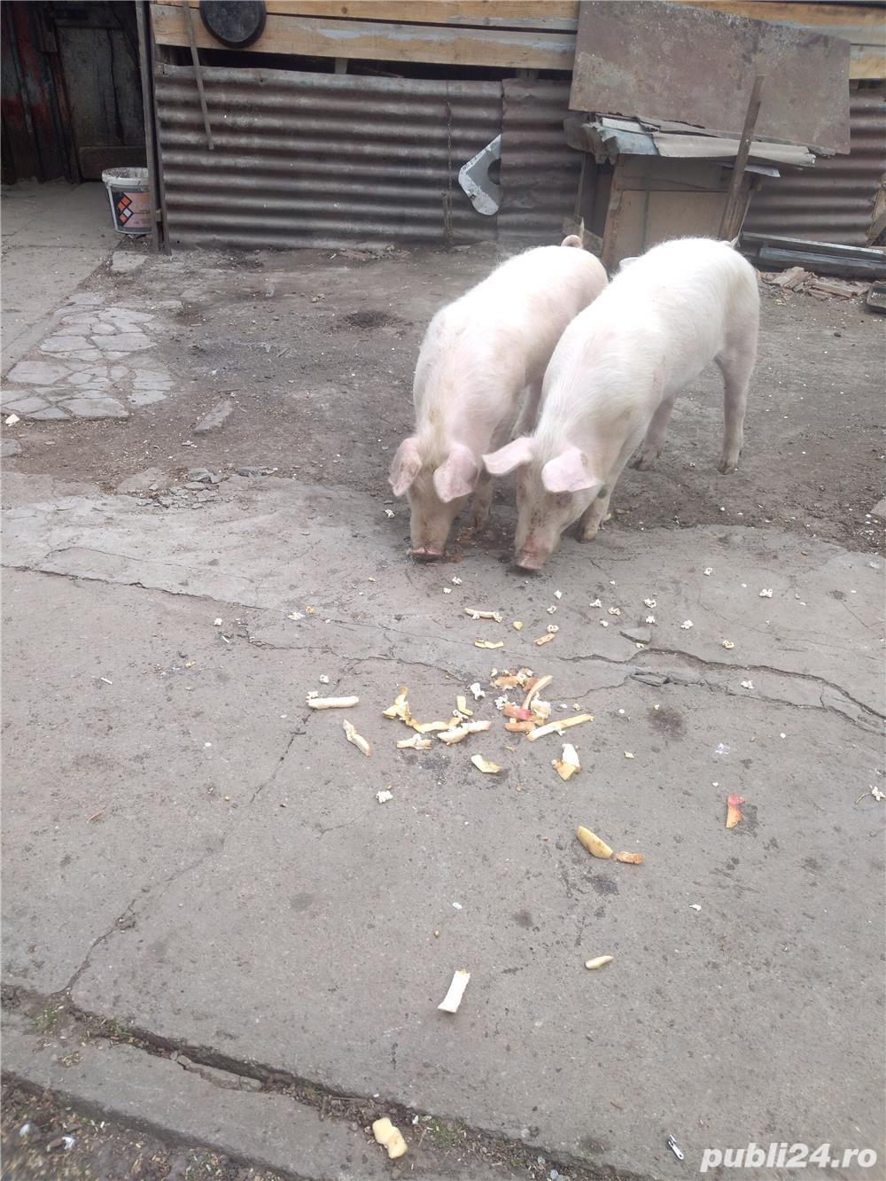 Pork vanzare
