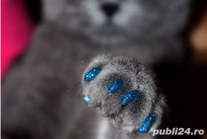 Protectie din silicon gheare pisica