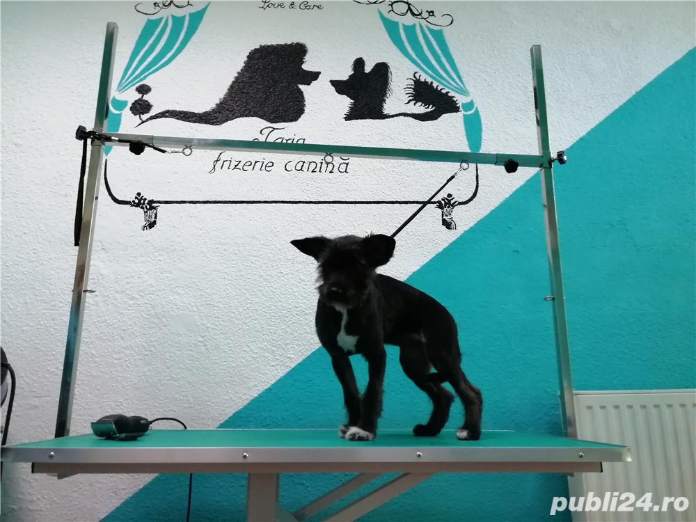Frizerie Canina , toaletare completa catei, spalat , tuns , periat , taiat unghii , curatat urechi