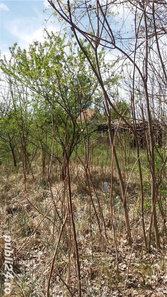 Téren cu o casa din lemn in Ungaria