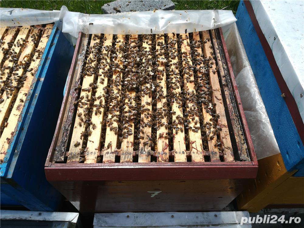 Vand sau schimb 25 familii de albine cu autoturism