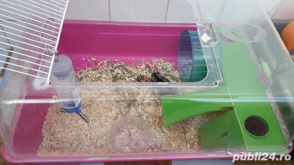 Cusca hamsteri + 1 hamster
