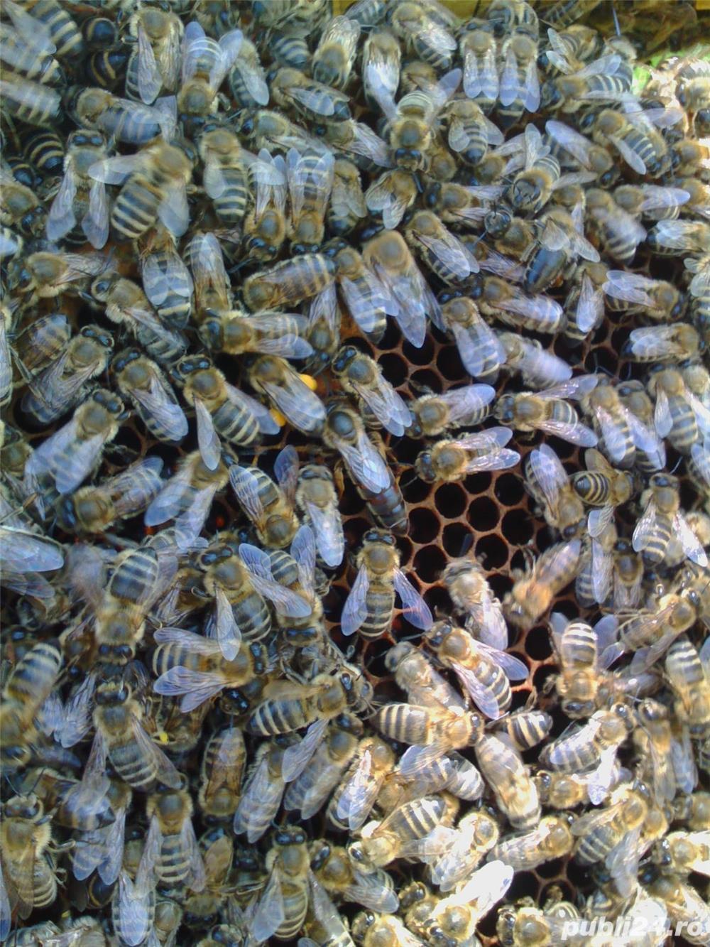 ‼️Vand familii albine SUPER pret‼️
