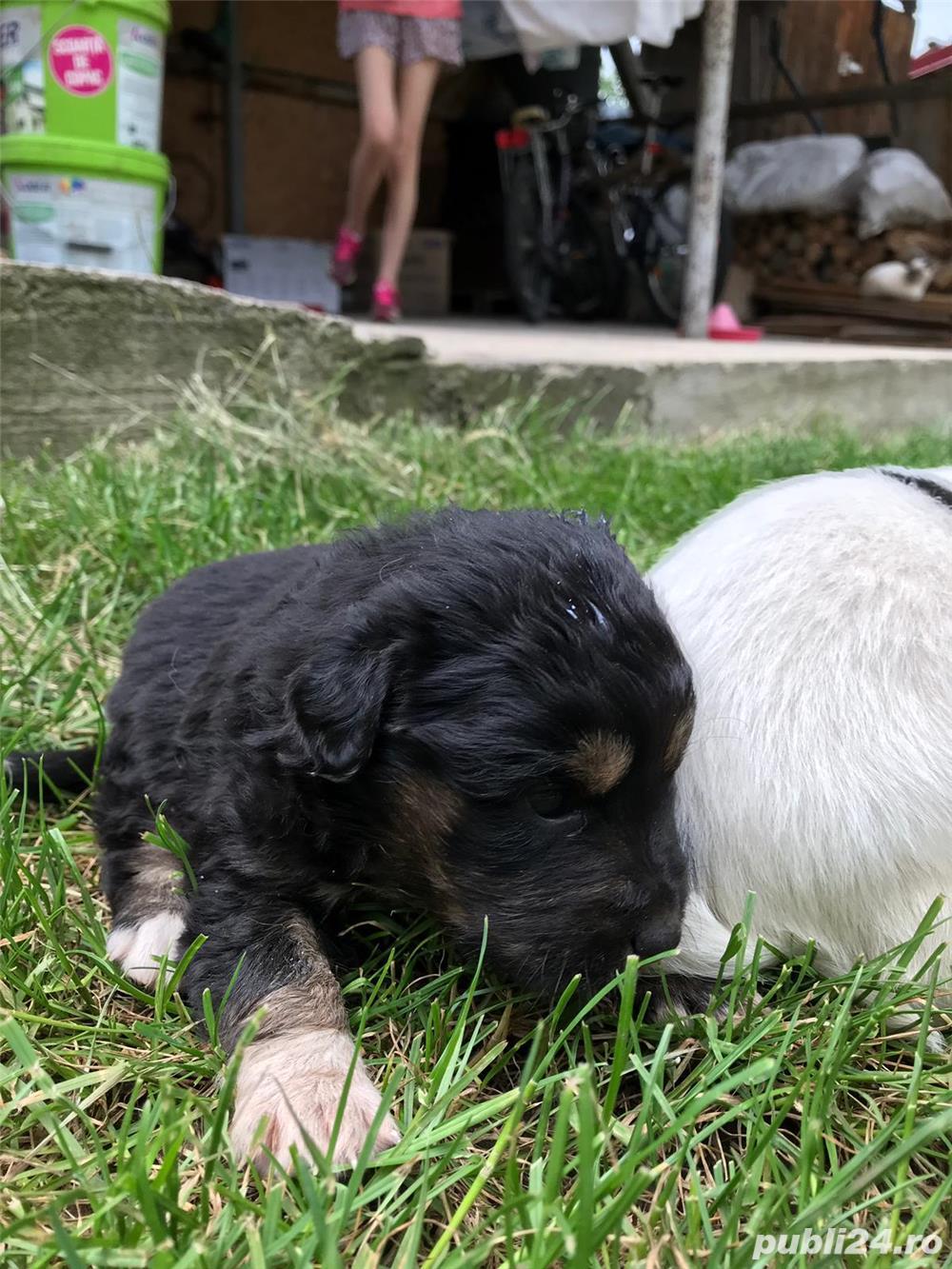 6 catelusi pentru adopție