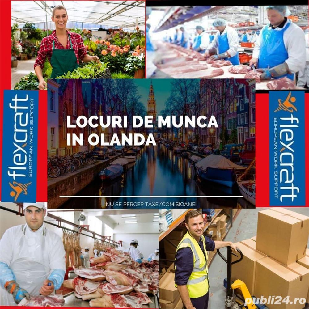 Locuri de munca in Olanda
