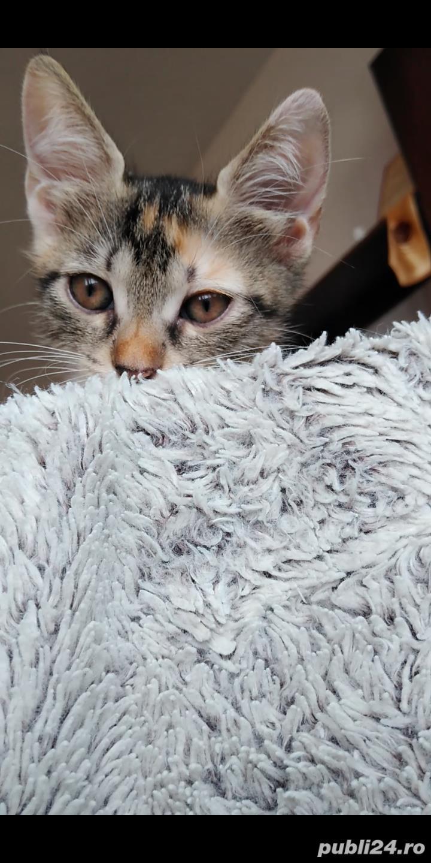Adopție pisici