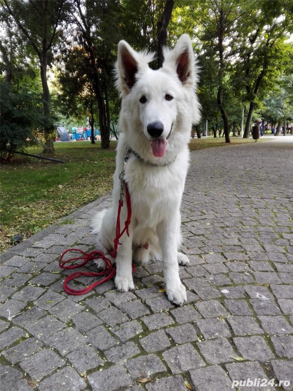 Dresaj canin de specialitate