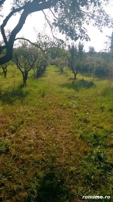Vanzare teren livada pruni
