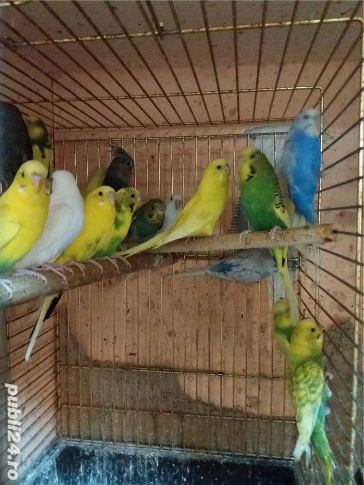 papagali toate rasele