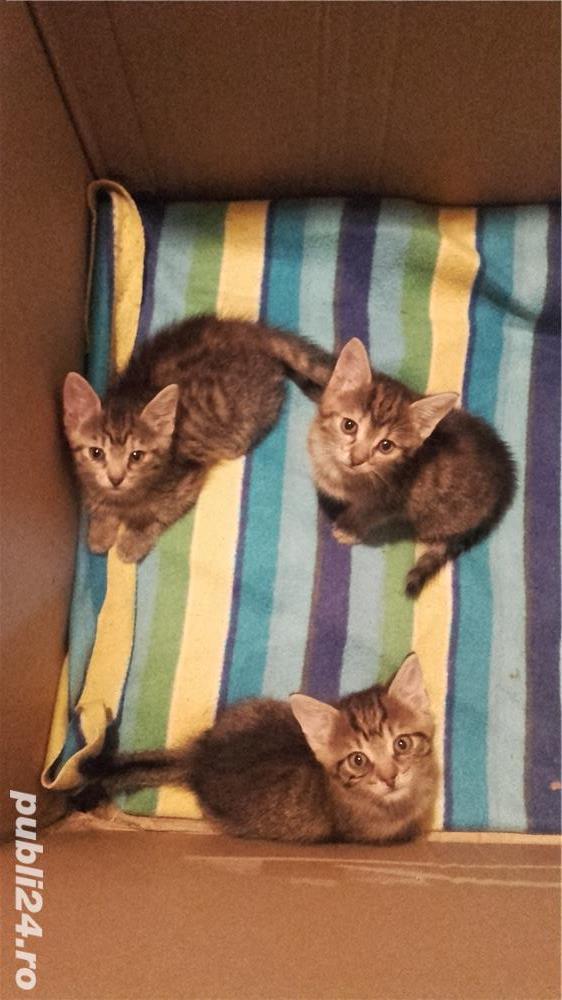Donez 3 pisicute