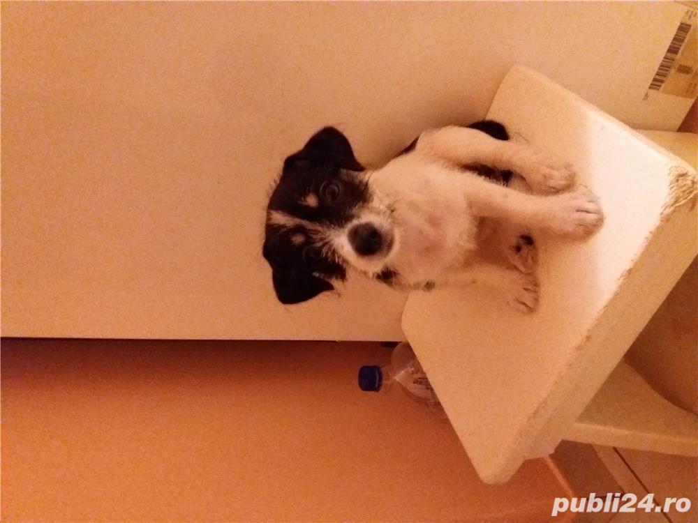 Vand jack russell terrier