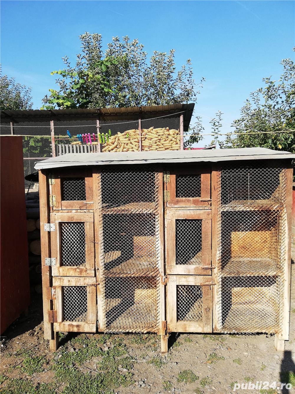 vand custi pentru iepuri in lei sau schimb lemne de foc