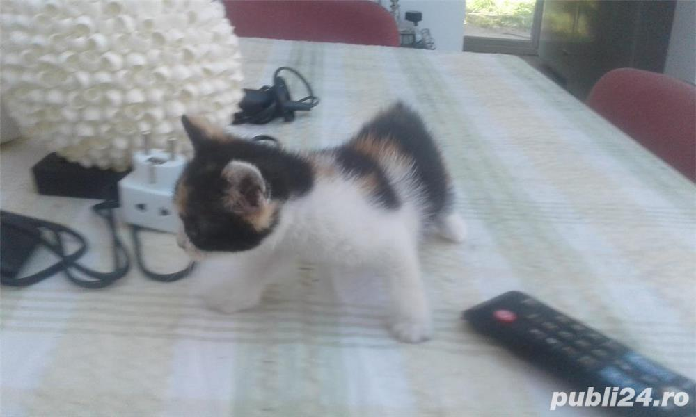 pisicute dragute asteapta sa fie adoptate