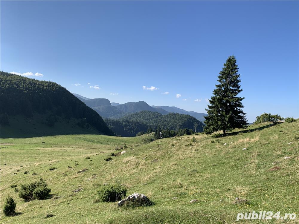 Teren 50 ha in Fundata la 15 km de Bran-Moeciu