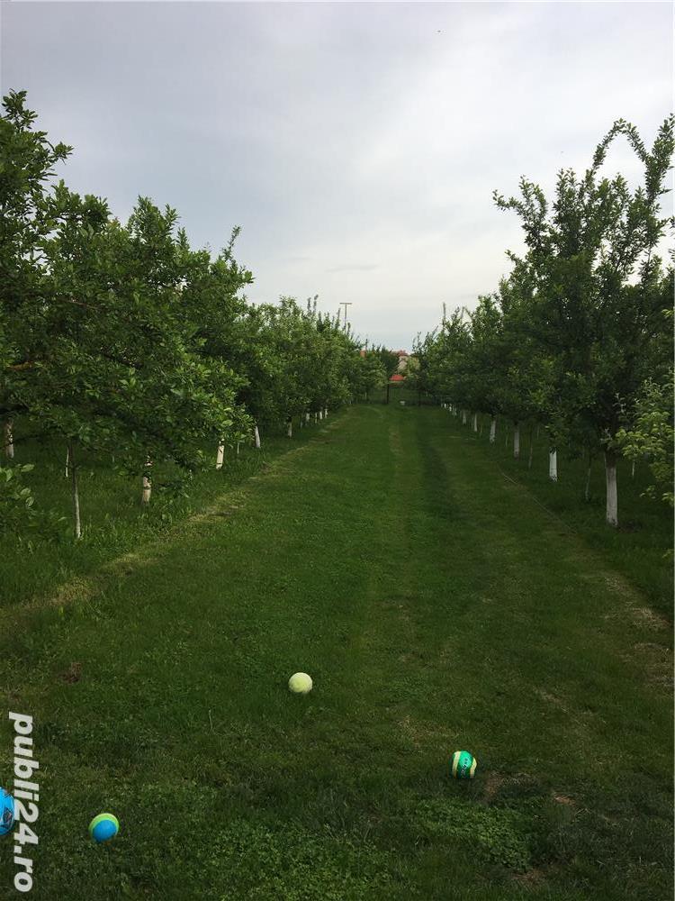 Teren intravilan plus plantatie pomi fructiferi in loc. Alios