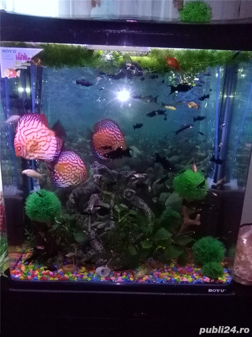 Vand urgent acvariu