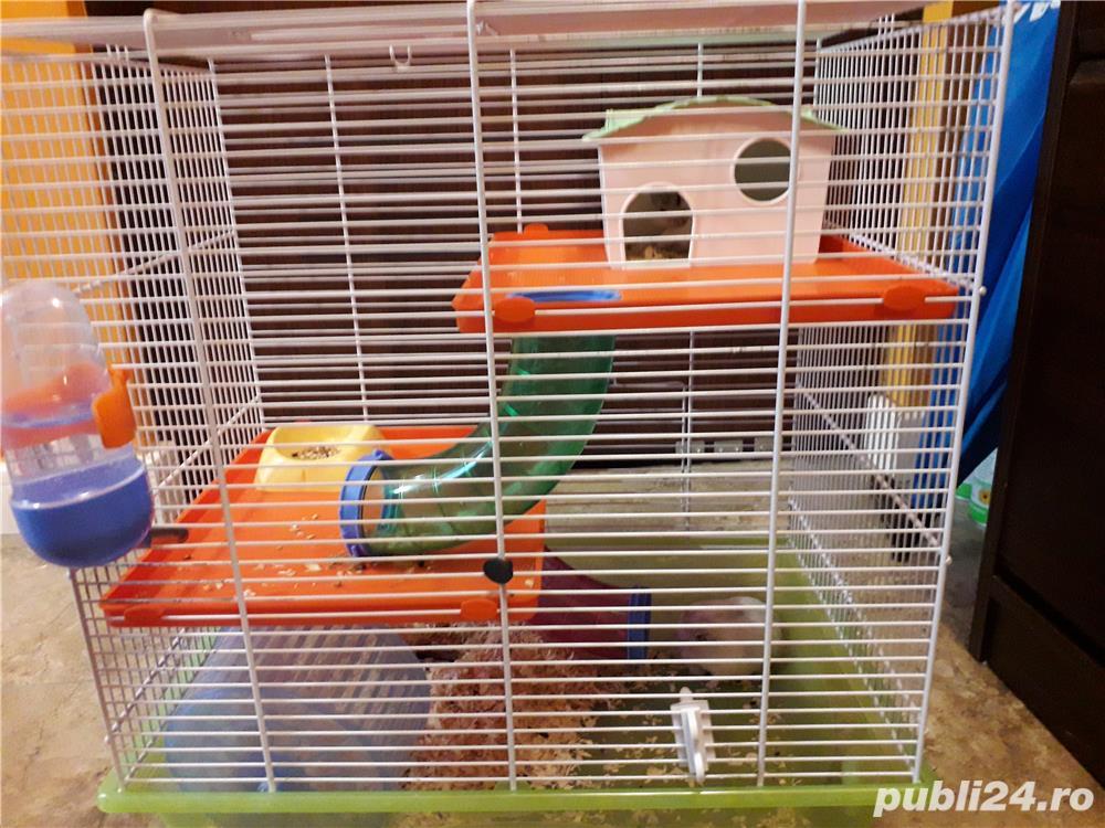 Hamsteri pitici siberieni, cușca si accesorii