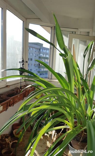 Apartament Titulescu, 3 camere decomandate, supr. totala 91 mp