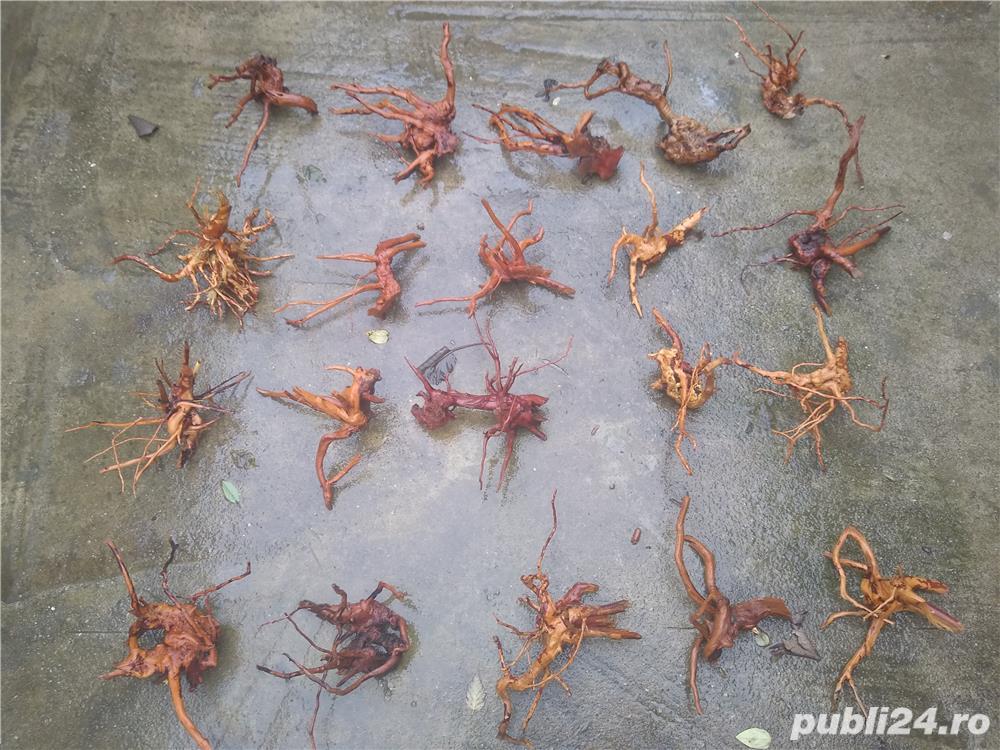 Decor acvariu pești lemn Red moor