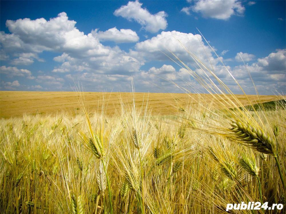 teren arabil, agricol  3 hectare Judetul Olt , Comuna Brancoveni Sat Valeni pret 20.000 euro neg.