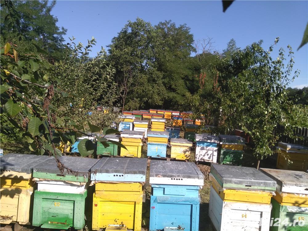 Vând familii si roiuri de albine