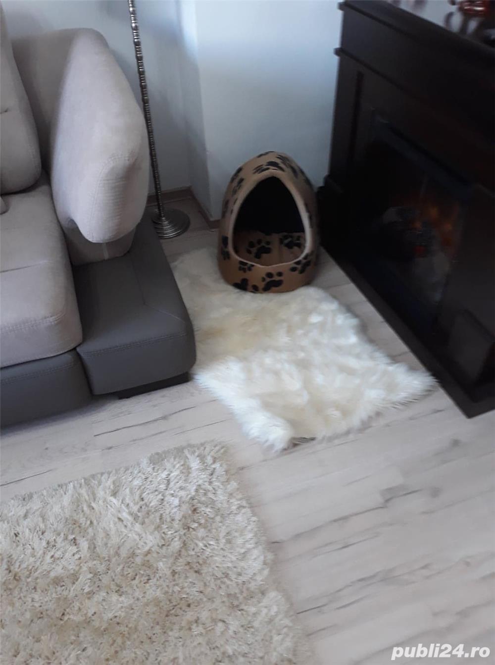 casuta pisica noua