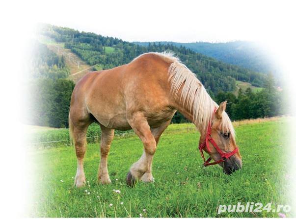 Amestec seminte pasuni pentru cai