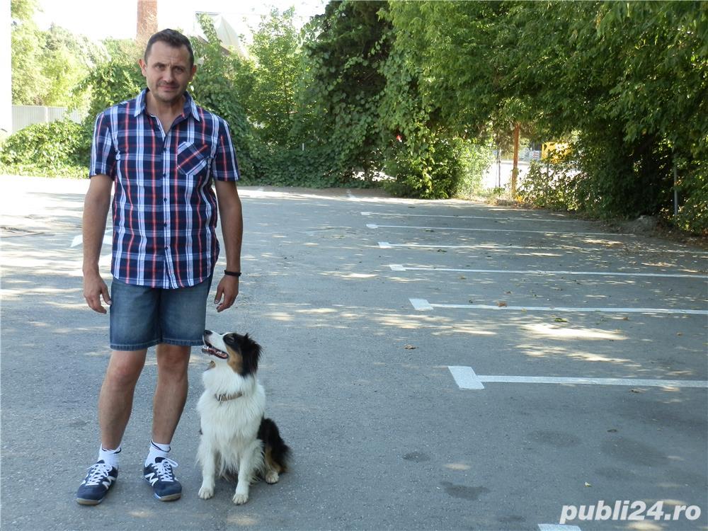 Dresaj canin / Plimbari