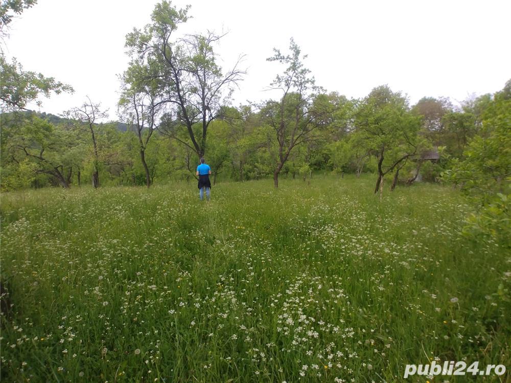 teren Runcu